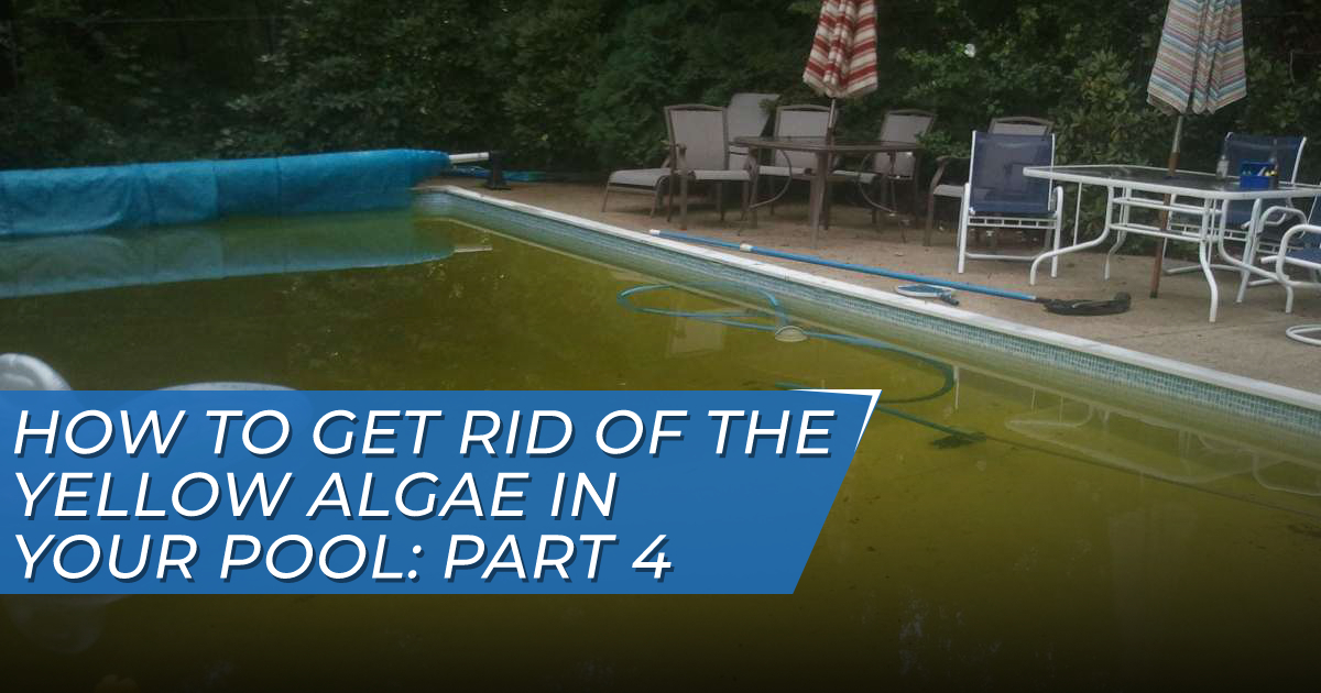 Yellow Algae in Pool